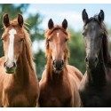 Para caballos